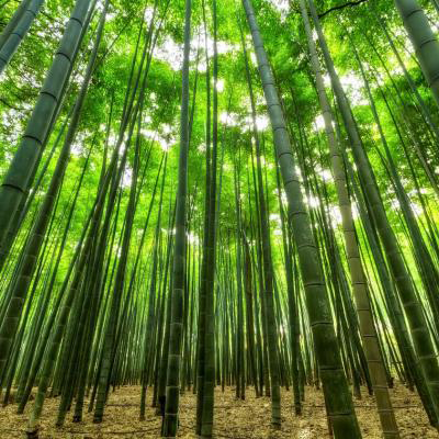 bambou-base des luminaires naturels